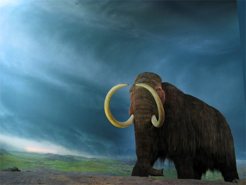 whoolly mammoth by Rob Pongsajapan