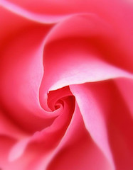 Pink Swirl, by tanakawho